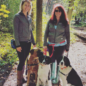 Insured dog walking/ pet services