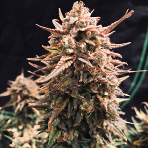 Grow Kits for Weed Legalization - Grow 4 Indoors All Year