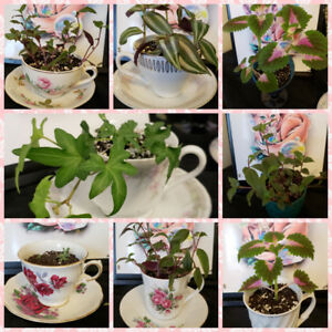 House plants and succulents - living art, great for a gift ♡