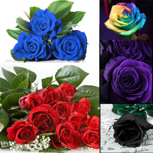 50Pcs Beautiful Flower Plant  Seeds Holland ...