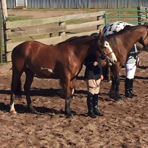 Horse training available