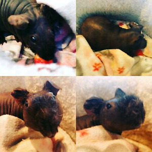 Small animal pet sitter available!