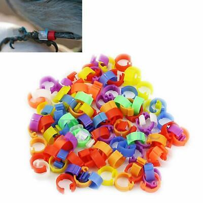 100X Chicken Hen Pigeon Leg Poultry Dove Bird Duck Chicks Parrot Clip Rings Band
