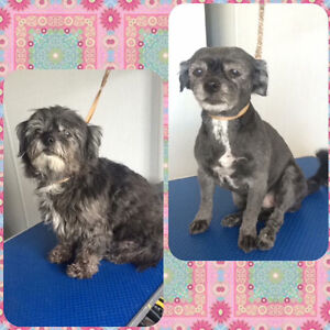 Dog Grooming! Appointments this week!
