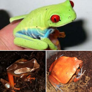 Tree Frogs & Tomato Frog