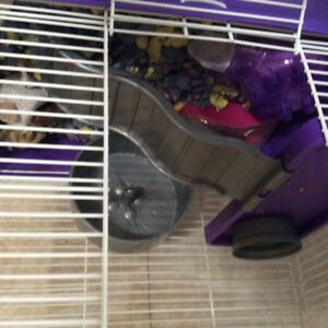 Hampster cage for sale . Make an offer