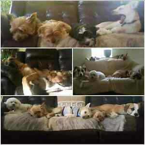 In our Home Dog Boarding - Balanced K9 Living   Cambridge Kitchener Area image 2