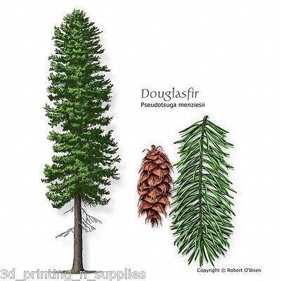 Rocky Mountain Blue Douglas Fir, Pseudotsuga Menziesii Glauca, Tree Seeds ()