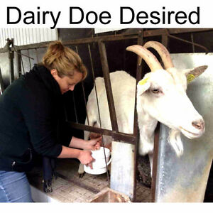 Dairy Goat wanted asap!