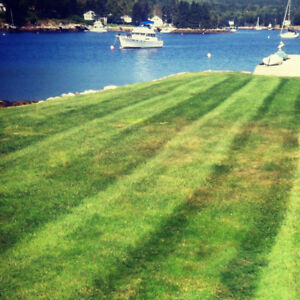 LAWN MOWING, MAINTENANCE AND CLEAN UPS