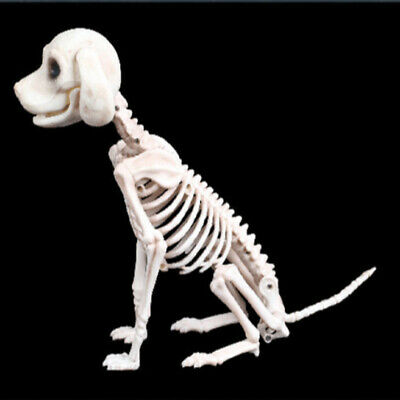 Halloween Skelett Katze Hund Drachen Prop Tier Knochen Party Shop Dekoration DE