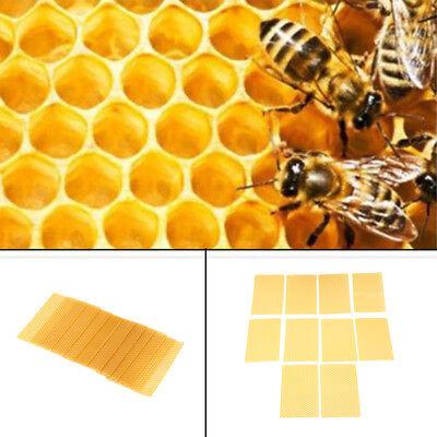 10 Pcs Beekeeping Honeycomb Foundation Wax Frames Honey Hive Equipment Tools
