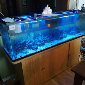 6' Long.. 130gallon Salt Water Fish Tank for sale CASH ONLY