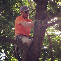 Skilled Tree and Property Services