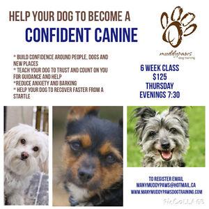 MMP- Confident Canine Class