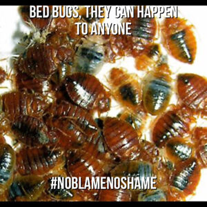 Anyone can get bed bugs, call 365-889-4540