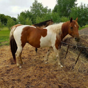 ISO: looking for this horse
