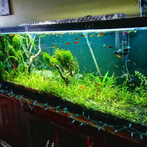 142 gallon fish tank fully planted with c02