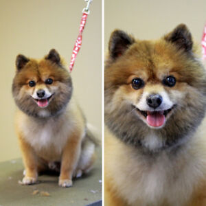Best Dog Grooming, Daycare, and Boarding Centre in Winnipeg!