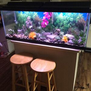 Beautiful 50 Gallon Aquarium With Great Decor For Sale