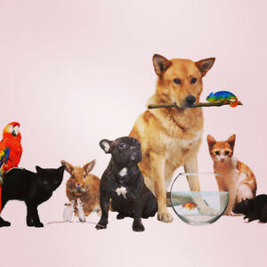 In-home pet sitting and dog walking services
