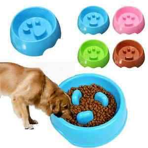Dog Eating Non Food Items