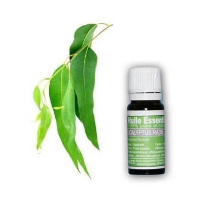 Aceite Esencial Eucalipto Cancelado Puro y Natural