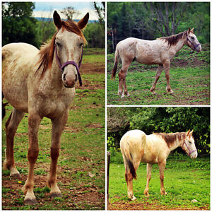 Project Colt - 2 Yr old - SOLD - Thanks to all inquires Peterborough Peterborough Area image 2