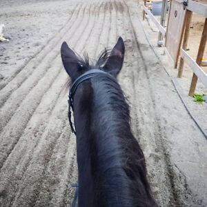 Horse for Lease - Best Horse I've Ever Met!