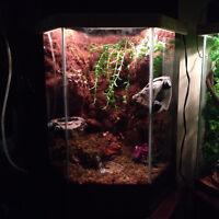 Naturalistic Reptile Setups – Price Reduced