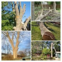 Tree Removal by Two Guys Tree Service & Landscaping