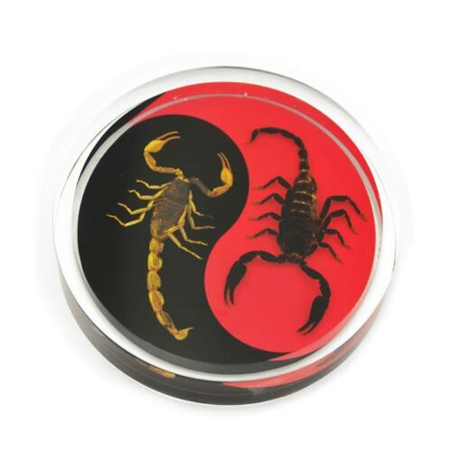 Scorpion Yin- Yang Red Black Genuine INSECT Desktop Paperweight  Paper Weight