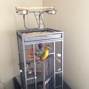 Beautiful Sun Conure and all Accessories