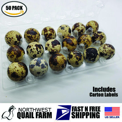 50 Jumbo Quail Egg Cartons Holds 18 Eggs Secure Snap Close Fast Shipping
