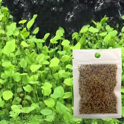 Home Aquarium Tanks - Home Aquarium Grass Mixed Seeds Water Grass Aquatic Home Fish Tank Plant Decor