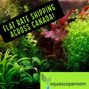 Live Aquarium Plant SALE—Buy 2 Get 1 Free