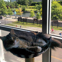 old montreal plateau catsitter petcare gardienne d'animaux chats