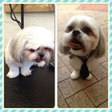 Pampered Pet Grooming Inglewood Stirling Area Preview