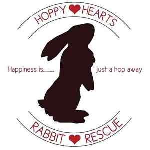 Hoppy Hearts Rabbit Rescue London Ontario image 1