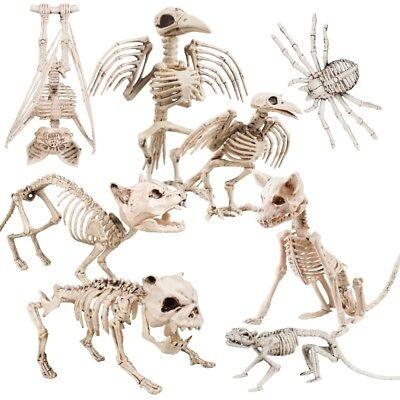 Dekofigur Halloween Tierskelett lebensecht: Ratte Hund Rabe Katze Fledermaus .