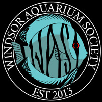 Your Local Aquarium club - free to attend first 2 meetings