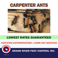 Reliable+Affordable pest Control Services in Hamilton