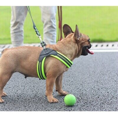 Pet Dog Control Harness Cat Adjustable Chest Strap Navy Vest Mesh Walk Collar