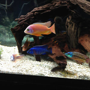 Buying or selling Fish or fish related accessories?