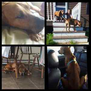 Fostering/Adopting a southern dog
