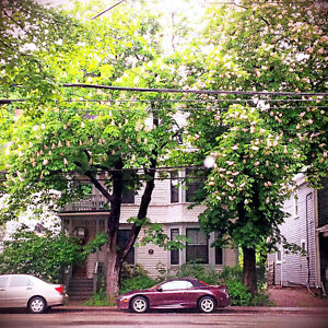 Clean, Bright, Rooms in Central Charlottetown