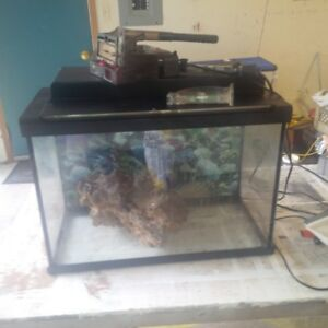 Salt water fish tank