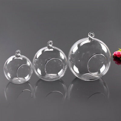 Succulent Style HANGING GLASS BAUBLE SPHERE BALL CANDLE TEA LIGHT HOLDER VASE 6c ()