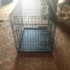 Enclosed Dog Kennel