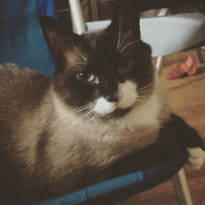 Adorable adult cat needs a new home